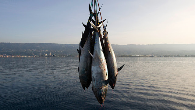"¿Guerra comercial?: Una ONG de EE.UU. ataca a Walmart por vender atún mexicano que ""matá"" a delfines"