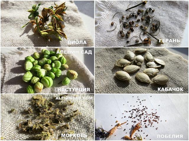 семена виолы, семена герани, семена настурции, семена кабачка, семена моркови, семена лобелии, свои семена, как собирать свои семена, свой банк семян, типы опыления у растений