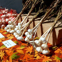 Southern VT Garlic and Herb Festival_New England Fall Events_Hard neck Garlic
