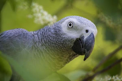 Parrots are beautiful birds with very different colors 5 Things You Need to Know about Parrots