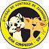 Zoonoses da Ilha castrou gratuitamente 810 cães e gatos entre janeiro e outubro