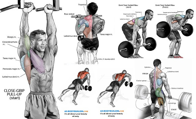 The best upper back workout all bodybuilding