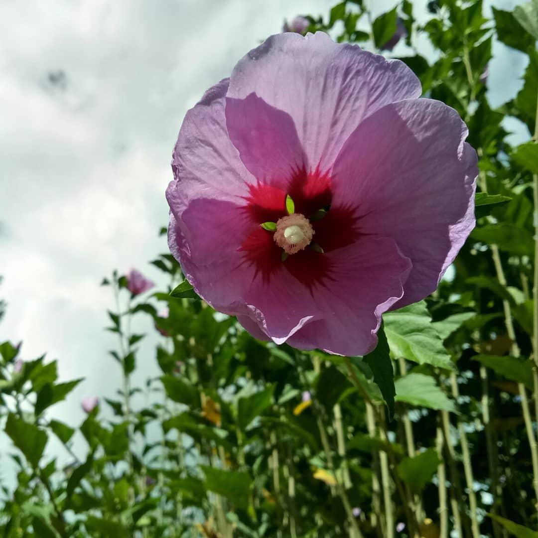 bhutan flower images