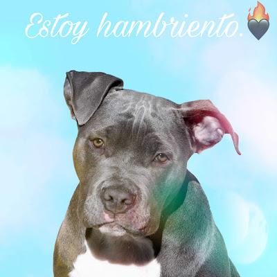 imagenes de perros, imagenes de perritos, fotos de perros, imagenes de perros, imagenes de perro