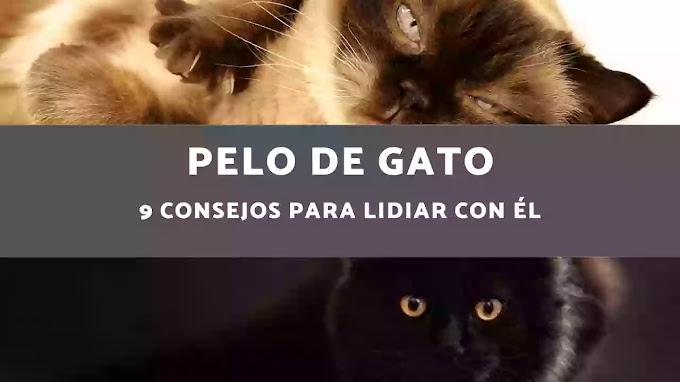 Pelo de gato - 9 Consejos para lidiar con él