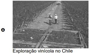 Exploração vinícola no Chile