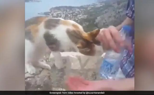 सांप का बच्चा अंडे से निकलकर हाथ पर लगा चढ़ने और फिर... देखें Video