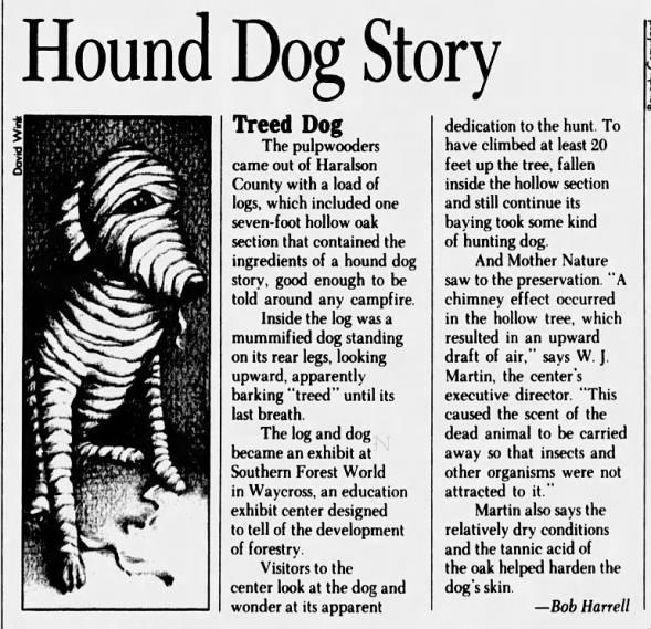 Stuckie The Mummified Dog Discovered Inside a Tree Trunk