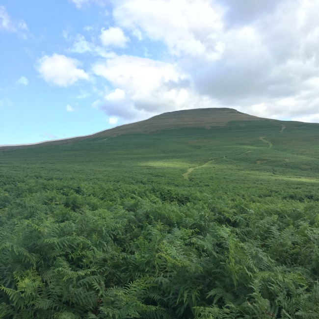 A-Walk-up-Sugarloaf-with-sugar-loaf-in-full-view