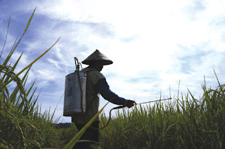 Mengenal Jenis-Jenis Pestisida