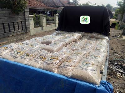 Benih padi yang dibeli   TEGUH Cirebon, Jabar.  (Pengiriman).