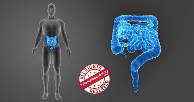 نظرة عن قرب على الأمعاء وعمليات الهضم