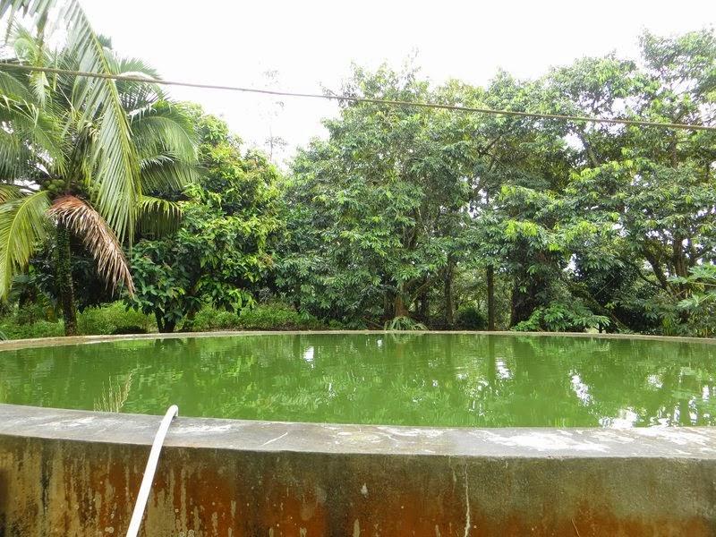 Самодельный пруд Таиланд