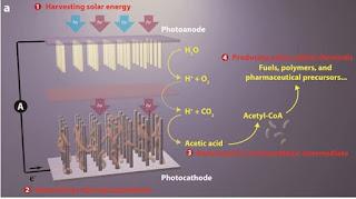 solar generation of biofuels