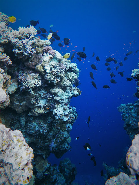 Snorkelling at the Blue Hole, Dahab, Egypt