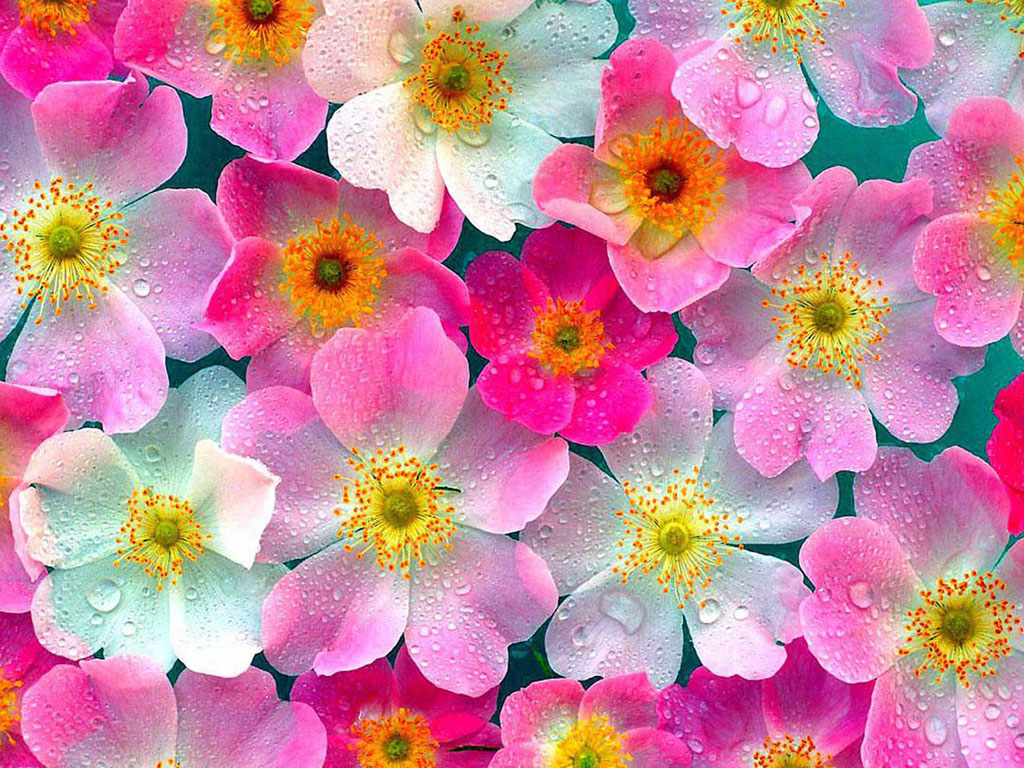 wallpaper: Flowers Wallpapers