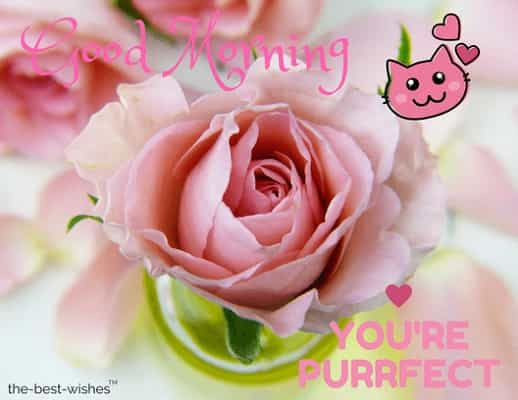 good morning pink flower download