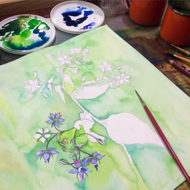 Painting, Work in Progress, Borage, Botanical Watercolor, Artist, Gardener, Lisa Estabrook, Artist Interview, My Giant Strawberry