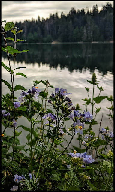 More Awesome Purple Flowers on the edge of Big East Lake