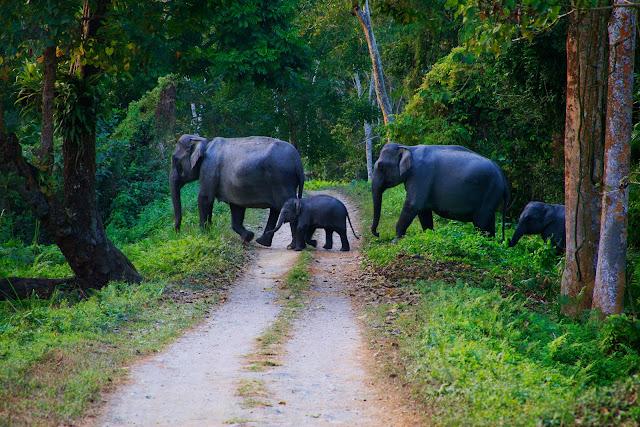 Voyage Periyar en Inde du sud. Voyage Periyar Periyar wildlife sanctuary en Inde du sud.