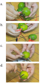 praktek uji listrik dalam buah jeruk