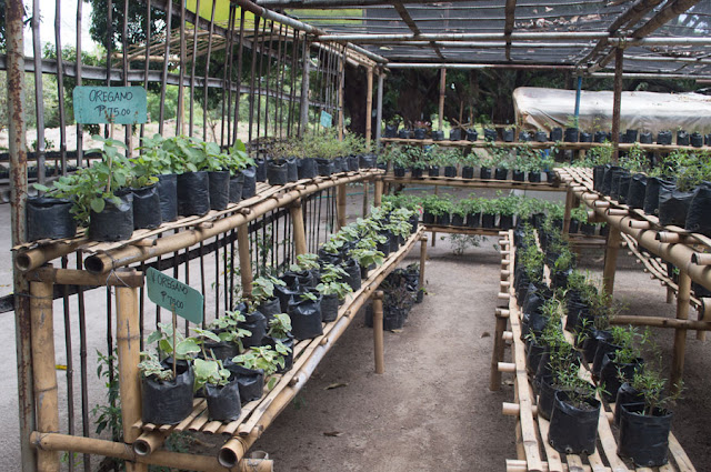 Nursery at Rosa Farm