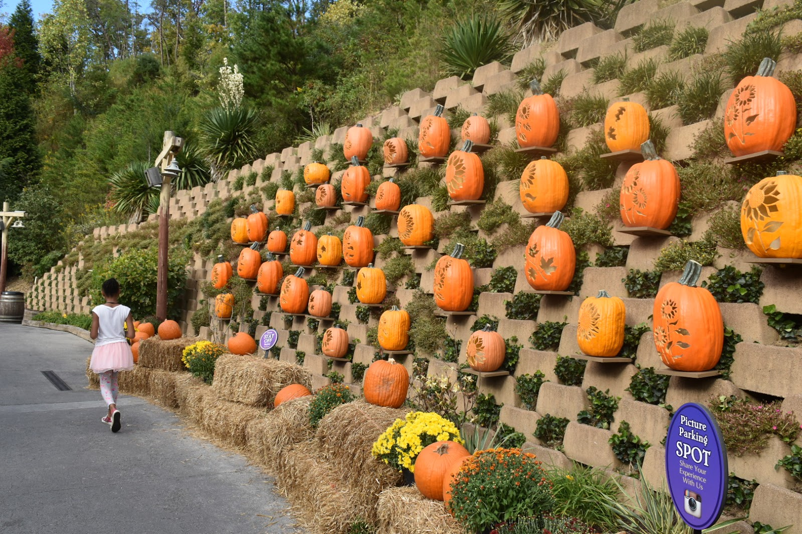 Dollywood Harvest Festival with My Whole Family  via  www.productreviewmmom.com