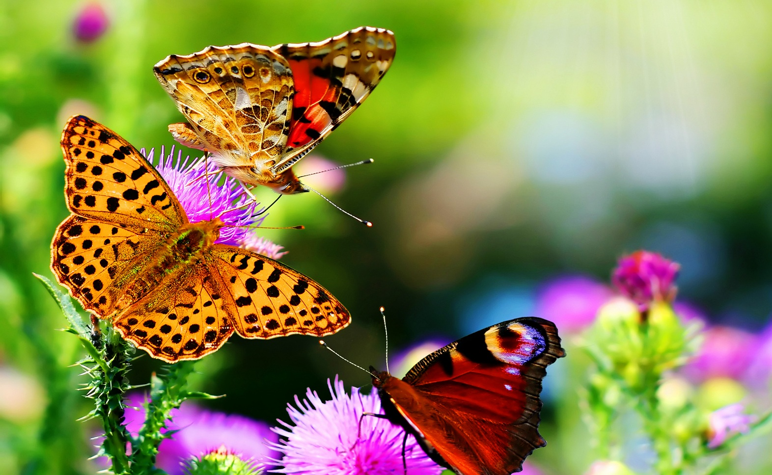 Flowers butterfly natural beauty desktop wallpapers | NATURE ...