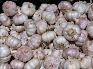 Garlic for the garden