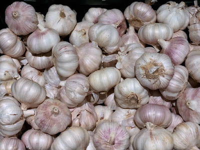 Garlic for the garden