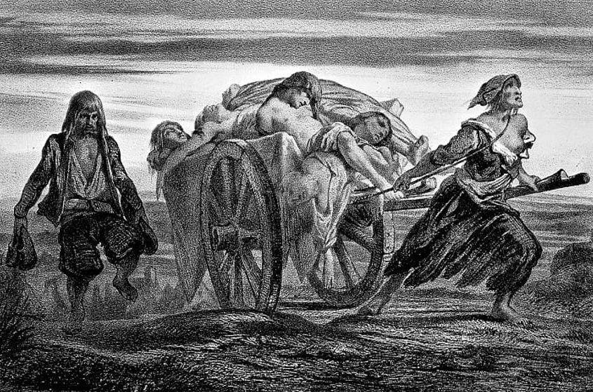 Misteri penyakit Black Death