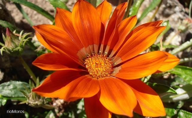 5 flores de temporada para el verano