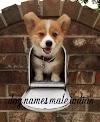 Dog names male indian - unique, female, funny, names in indian best in 2021
