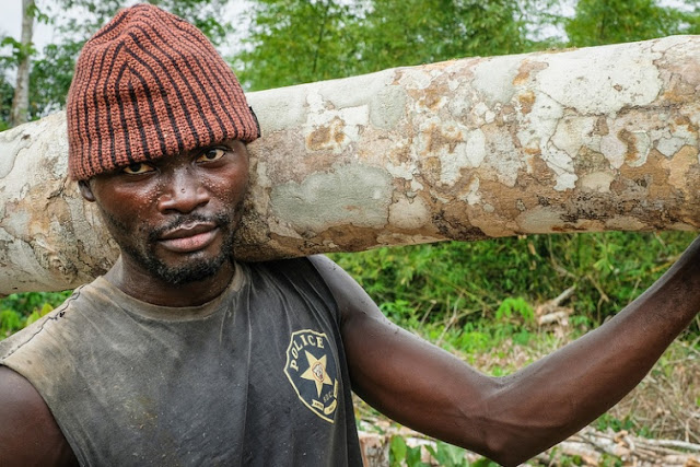 Timber cutting in the Congo Africa