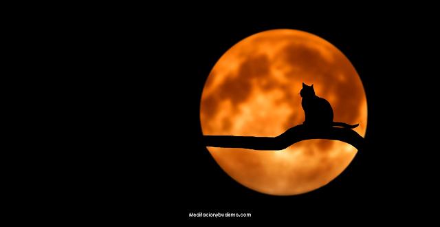 La magia de los gatos en la meditación