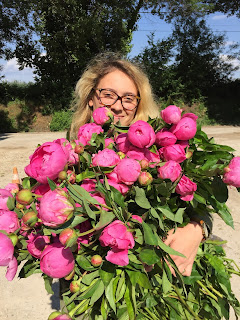 Large bunch of just-picked pink peonies