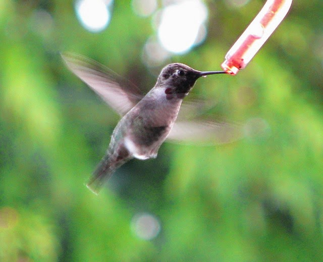 Interesting research in the sense of taste, especially in how hummingbirds taste sweet stuff, is tainted by unwarranted evolutionary speculations presented as science.