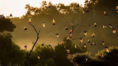 Murciélagos: biodiversidad y control biológico de plagas