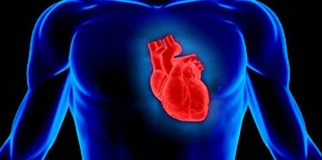 Aparato circulatorio y biologia