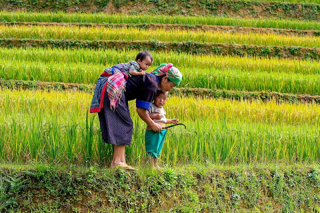 Vietnam Typical Tours Guide to Family Vacations Made Easy At Vietnam