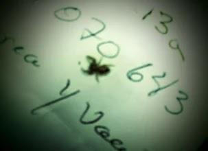 insecto en oido