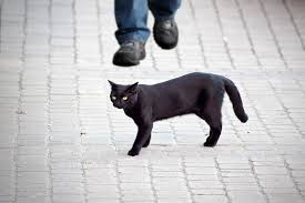 Black cats crossing your path superstition