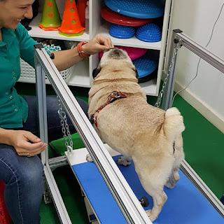 aparelho de fisioterapia veterinária