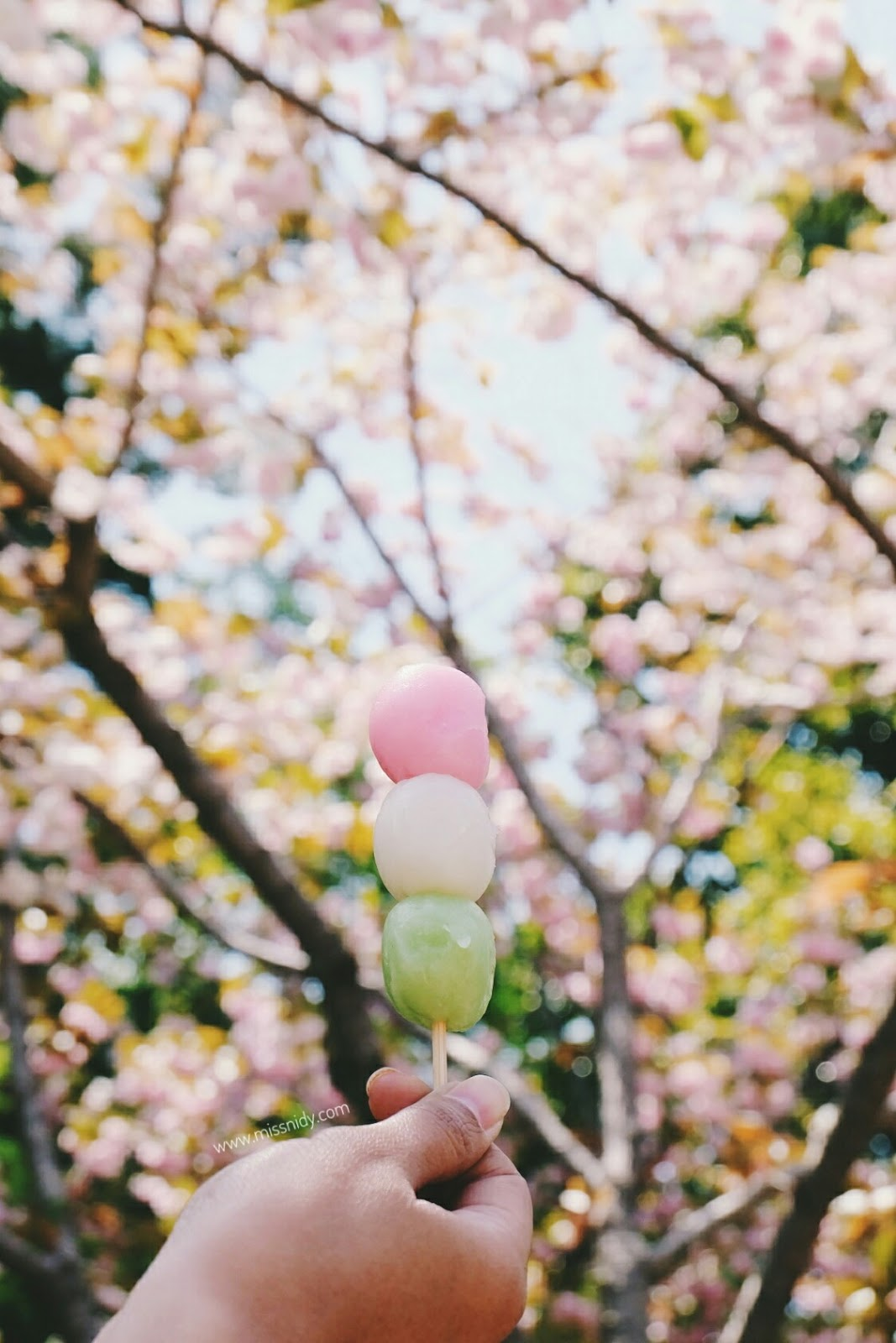 dango in spring