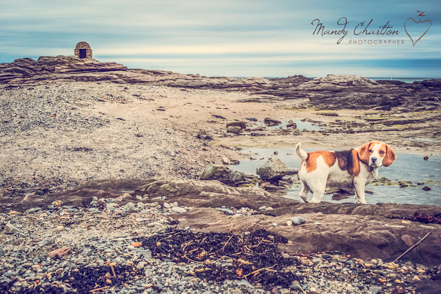 Mandy Charlton, Travel Photographer, seahouses, holly bobbins, beagle, dog friendly, travel photography