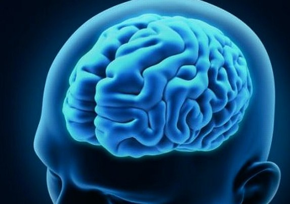 Perkembangan Otak Manusia Bayi Dewasa