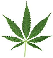 Plantar Marihuana. Como plantar Marihuana. como dejar la marihuana. los adolescentes y la marihuana. como hacer para que mi hijo deje de drogarse