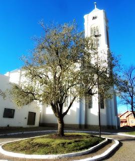 Árvore Cambará e Igreja Matriz, em Cambará do Sul, Rio Grande do Sul
