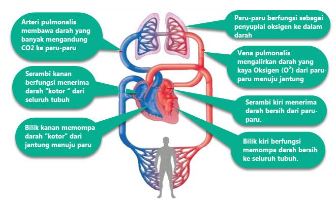 Fungsi Organ