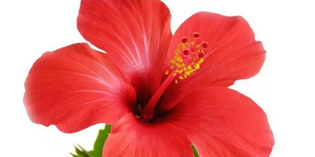 Bunga Kisah Orang Mati Hidup Lagi
